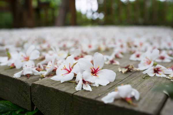 taiwan-tablefortwoblog-98