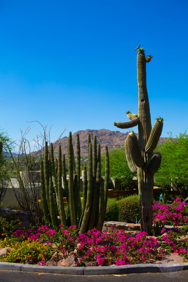 scottsdale-tablefortwoblog-11