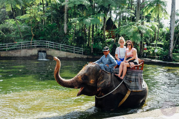 Bali Indonesia Elephant Safari Park Lodge Table For Two