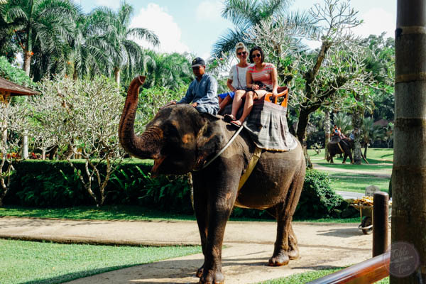 The Elephant Safari Park Lodge is one place to not be missed during your trip to Bali, Indonesia! It is an experience of a lifetime and you will go home with a deeper love for these gentle giants. Full review on tablefortwoblog.com!