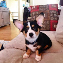 Meet Winston!