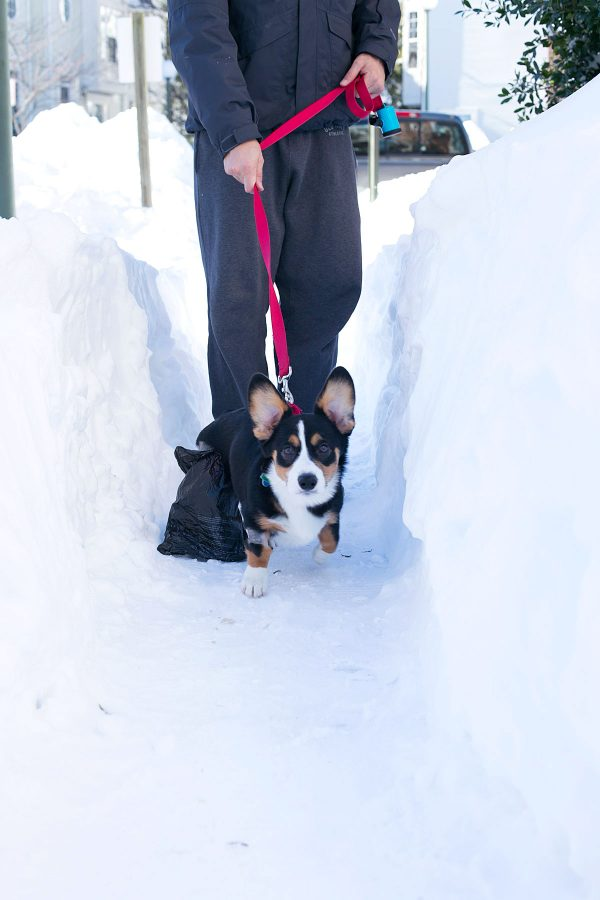 blizzard-2016-tablefortwoblog-16