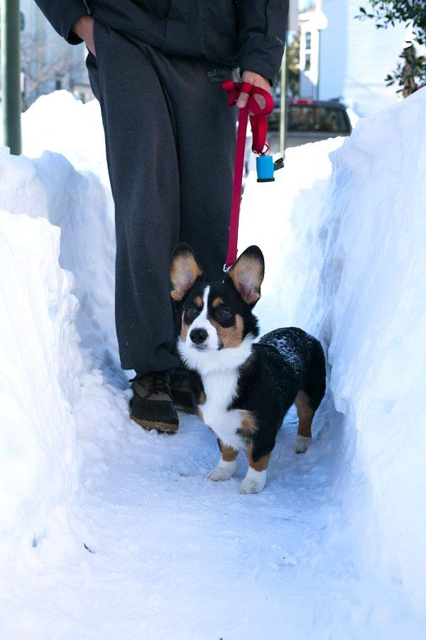 blizzard-2016-tablefortwoblog-25