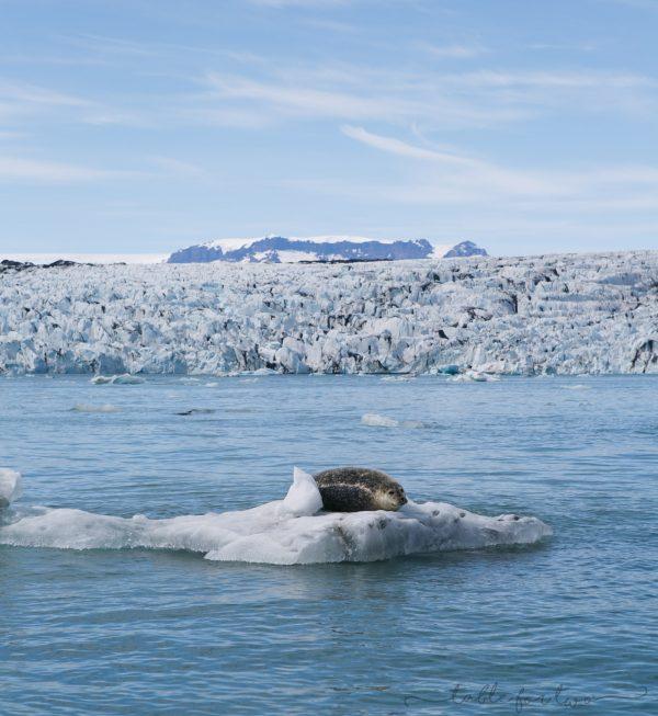 iceland-in-5-days-day-4-tablefortwoblog-6