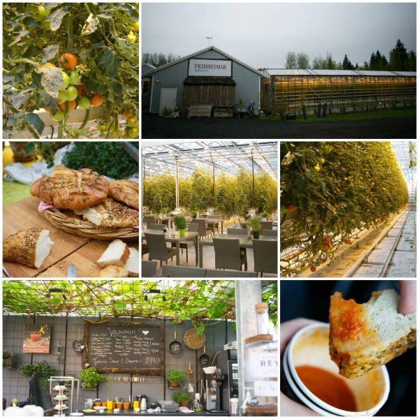 tomato-farm-collage