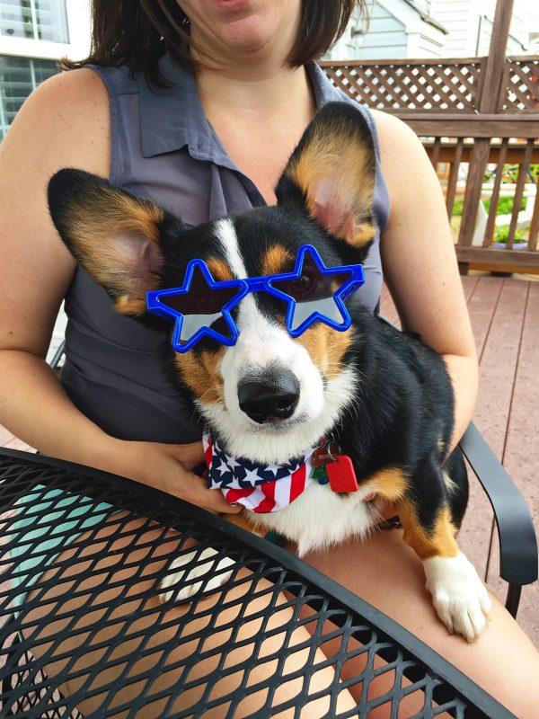 Winston the corgi - July 4th