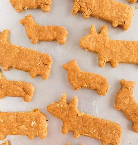 The cutest dog biscuit treats for your furry friend!!